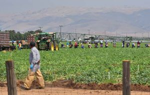 Salinas-valley-farmworkers-8-640